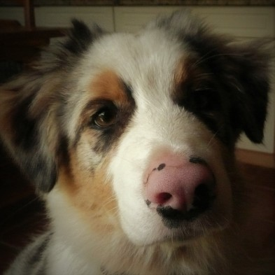 Pink nosed puppy